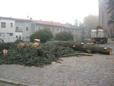 Cedri tagliati a Cesano Maderno