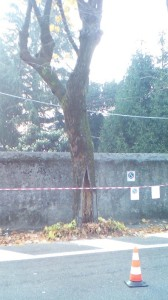 Lecco, verde pubblico