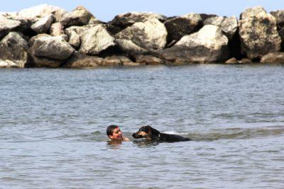 In Italia vi sono spiagge dedicate ai cani dove è persino permessa la balneazione