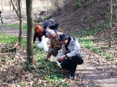 raccolta aglio orsino parco valle Lambro