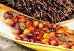 Con o senza olio di palma