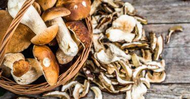 Funghi, alla scoperta del loro uso in cucina